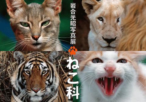 岩合光昭写真展「ねこ科」|株式...